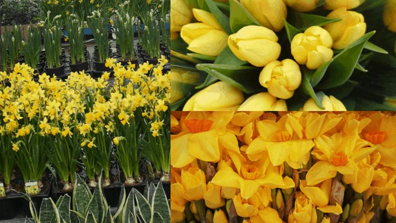 Karens Adventures In Colour For February Yellow Flowers Karen Haller